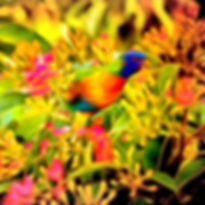 Colourful_Parrot_Sketch_1.jpg