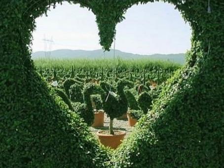 Heart Chakra - The Gateway to Life