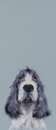'Puppy Dog Eyes'