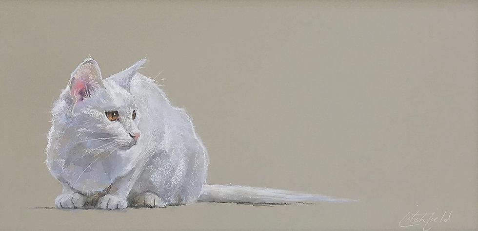 white cat_edited.jpg