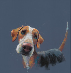 Hound Dog - prints available