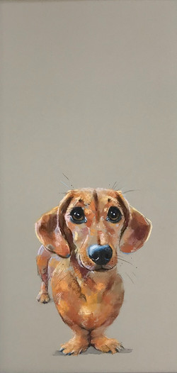 'Little Sausage' - available