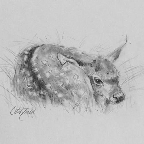 fawn sketch
