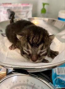 new kitten.jpeg