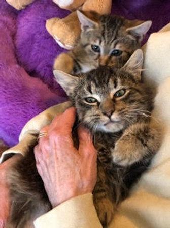 Sponsor a Kitten in Foster Care