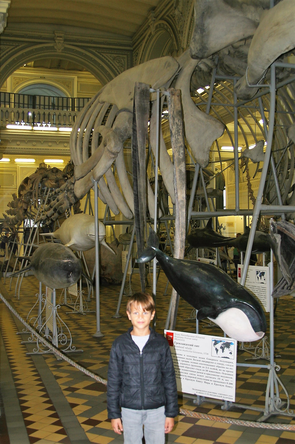 In the entrance hall, stands a giant blue whale skeleton.