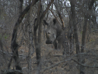 Stuck in the Kruger (part 2)
