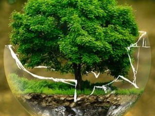 Small Ways Your Business Can Save the Planet