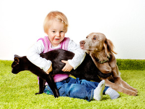 Gelenkprobleme beim Hund