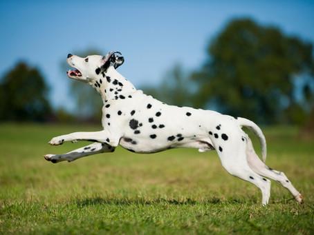 Sie finden Ihr Hund wird langsam alt? Dieser Naturmittel-Mix hilft.