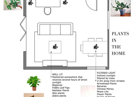 HOW TO HOUSE PLANT - A VISUAL GUIDE