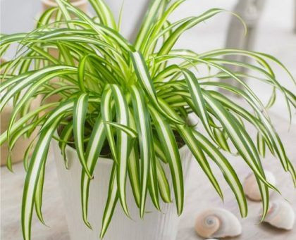 Benefits of real indoor plants in the home and how they improve your health.