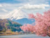 Mountain Fuji in spring at Kawaguchiko,