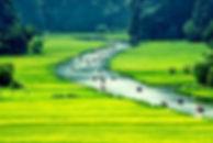 Rice field and river, NinhBinh, vietnam