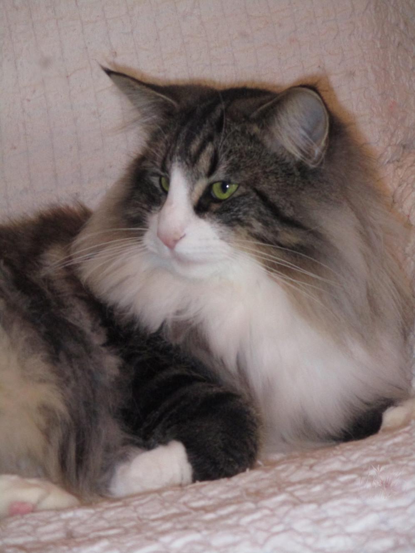 Rete Per Gatti Condominio reti in condominio | allevamento di gatti norvegesi a monsano