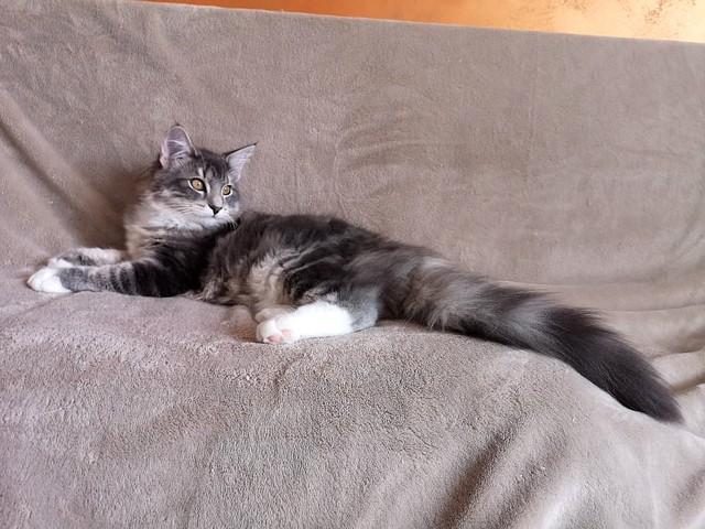 Kokeshi, 5 mesi
