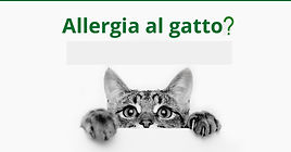 allergia-gatto come difendersi.jpg