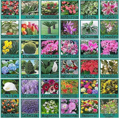 piante velenose.jpg
