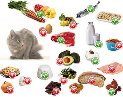 alimenti vietati.png