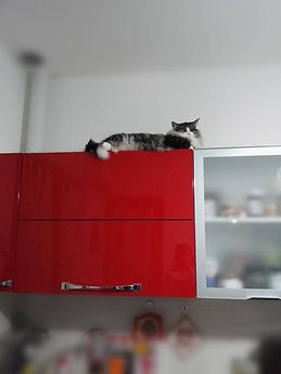 dall'alto della cucina