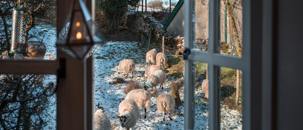Shepherds Hut - Window View 02.jpg