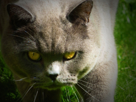 Cat owners pass on personality traits to their pets!
