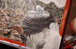 """""""La déforestation de l'Amazonie ralentit"""""""