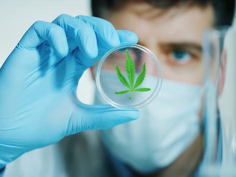 Cannabis and the Coronavirus