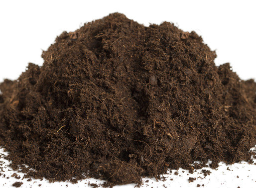 5 Good Soil Products for Growing Cannabis