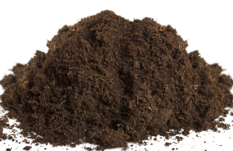 A rich growing medium with organic matter like coco coir, peat, and forest humus.