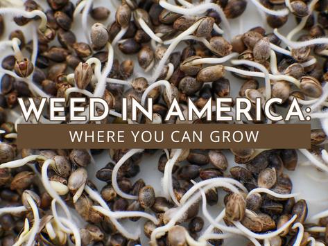Where You Can Grow Marijuana in 2021