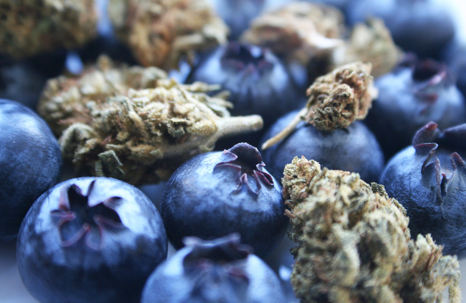 Blueberries and cannabis buds depict a terpene profile of aroma and taste.