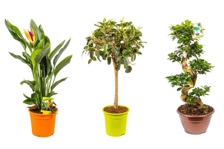 BonPlants: la tua pianta online