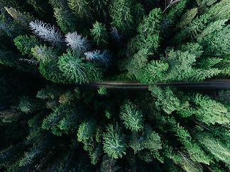 TOPVIEW | Forstwirtschaft