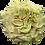 Thumbnail: Matcha