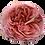 Thumbnail: Romantic Antike