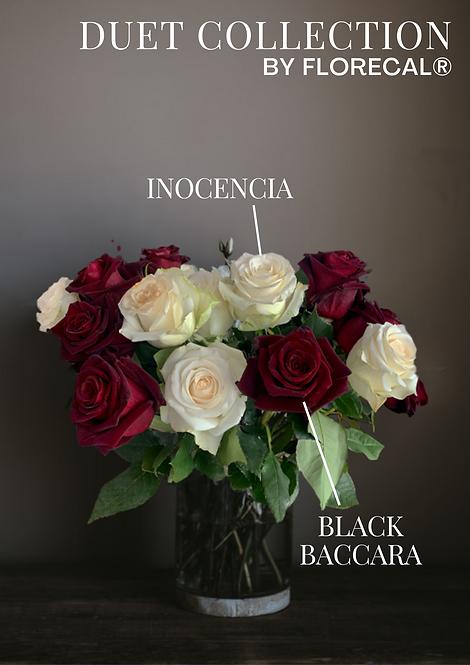 Duet Black Baccara & Inocencia