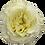 Thumbnail: Mayra's White
