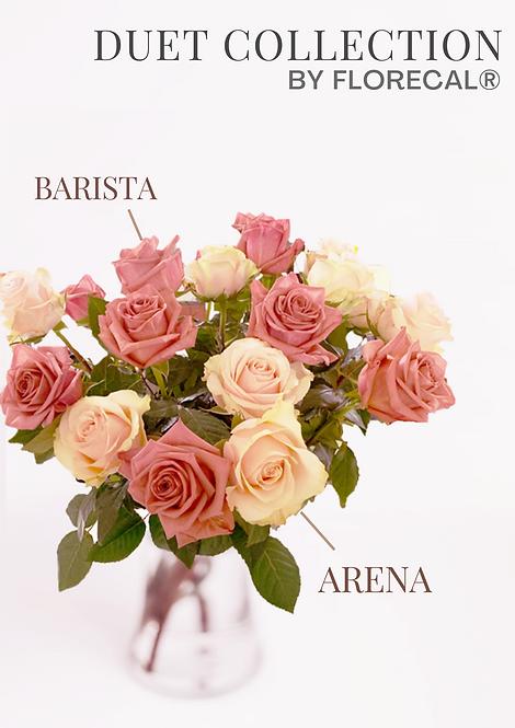 Duet Barista & Arena