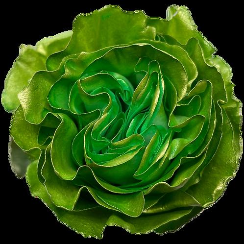 Folding Green