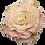 Thumbnail: Rose Alabaster