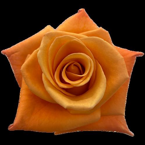 Orange Unique