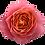 Thumbnail: Rosa Loves Me