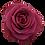 Thumbnail: Endora