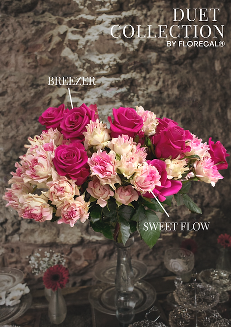 Duet Sweet Flow & Breezer
