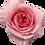 Thumbnail: Pink X-Pression