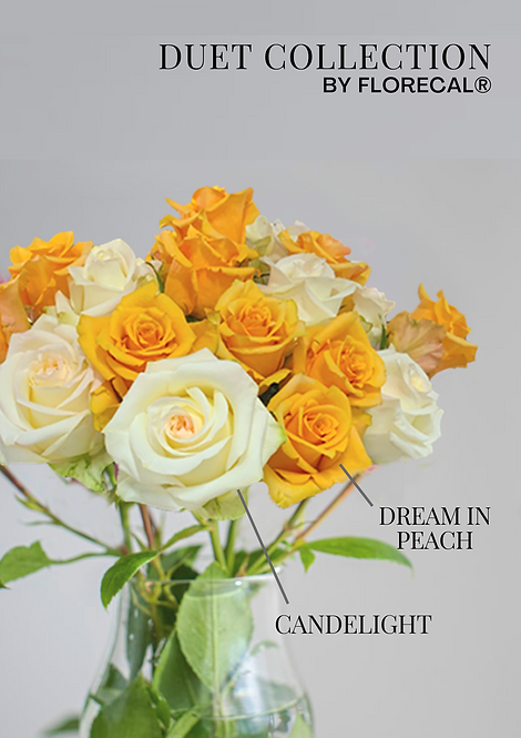 Duet Candelight & Dream in Peach