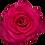 Thumbnail: V.I.Pink