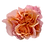 Thumbnail: Mayra's Peach