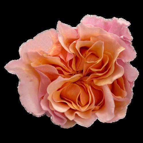 Mayra's Peach